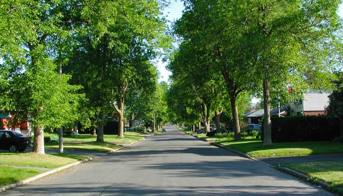 Street and neighborhood